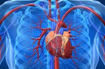 Центральное венозное давление: норма, алгоритм измерения, причины ...