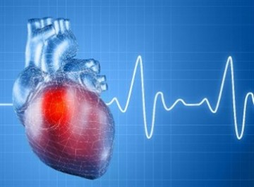Изображение - Китайские таблетки от давления на травах heart_340x255_360x266