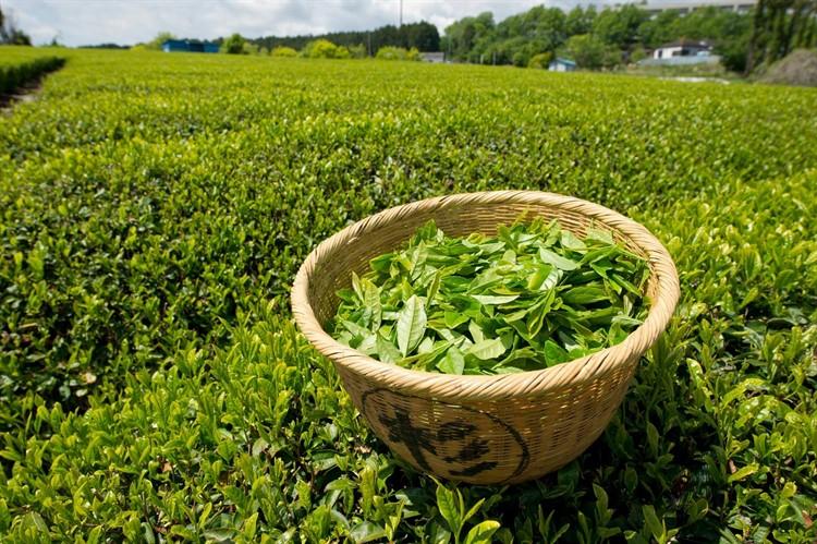Изображение - Крепкий чай повышает или понижает давление 21welltea-superJumbo_750x499