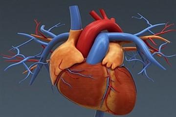 Изображение - Норма нижнего давления по возрастам heart_5_360x240